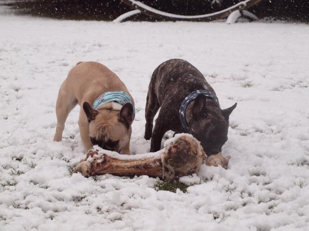 Che & Murphy mit Knochen