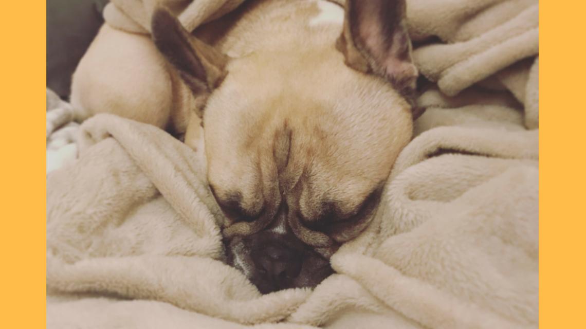 Murphy Hundesalon
