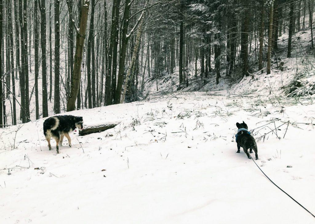 Hundewanderung