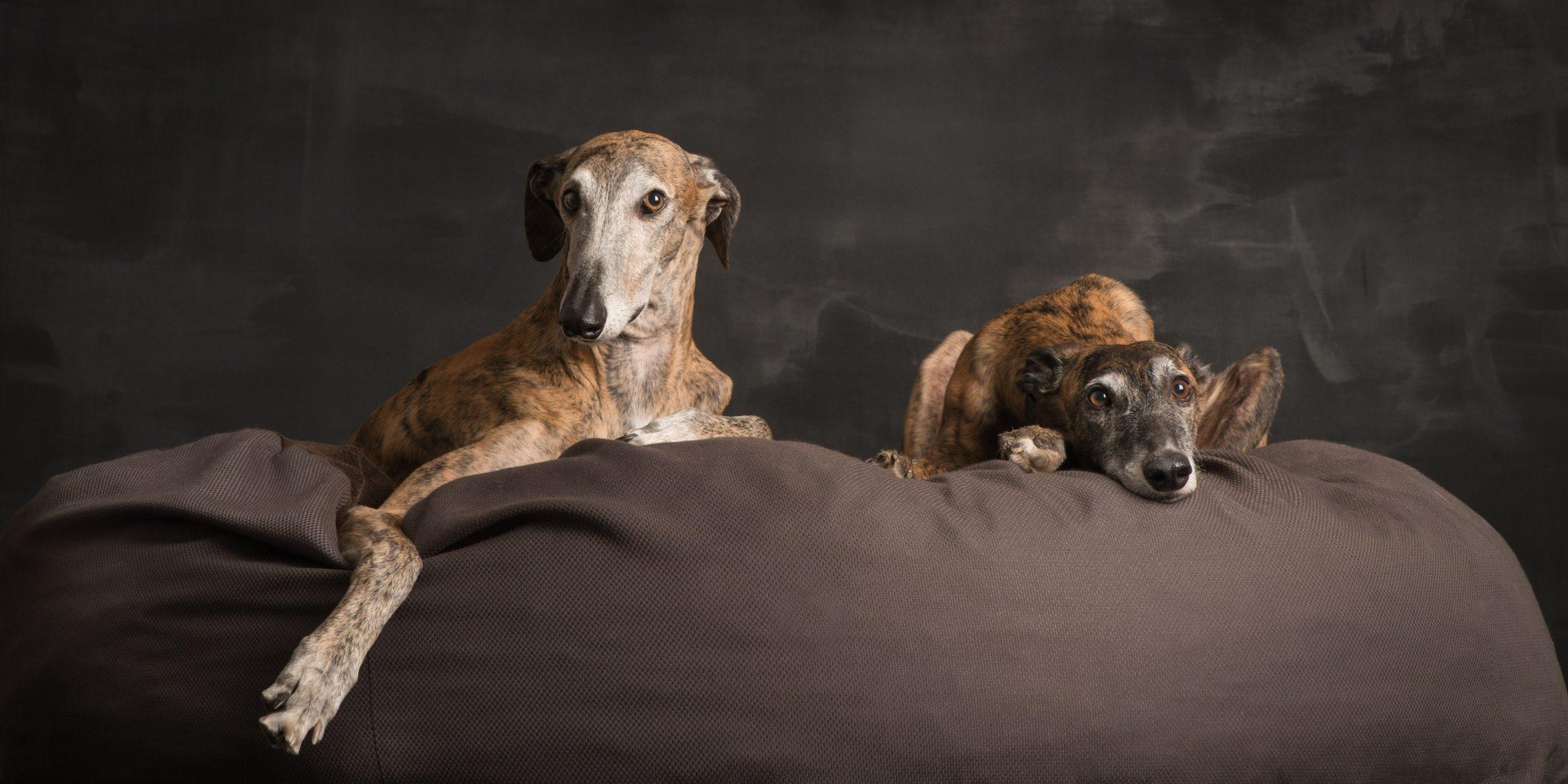 Hundereise Wolkenbett