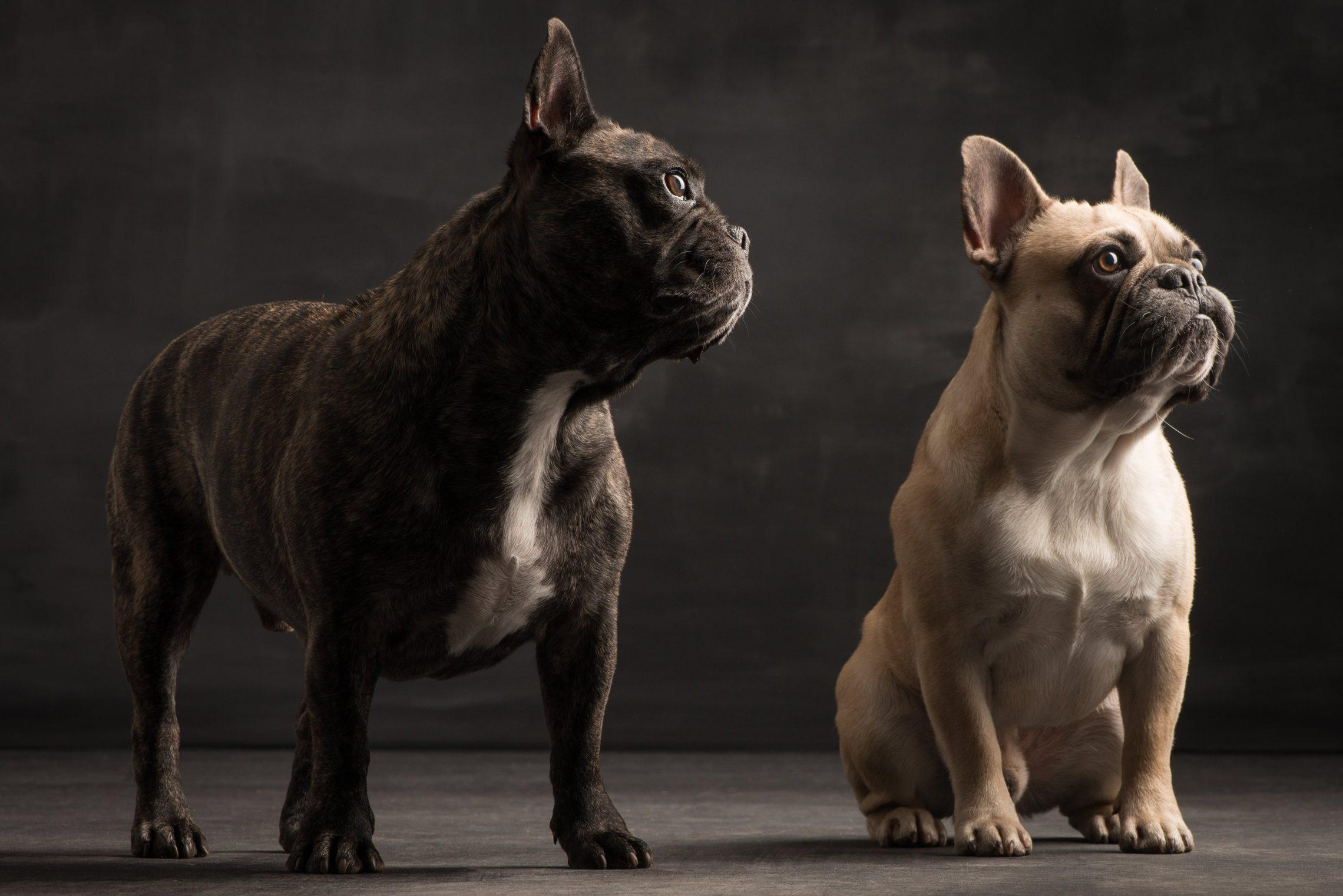 Beste Hundefreunde