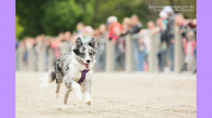 Hunde Veranstaltung