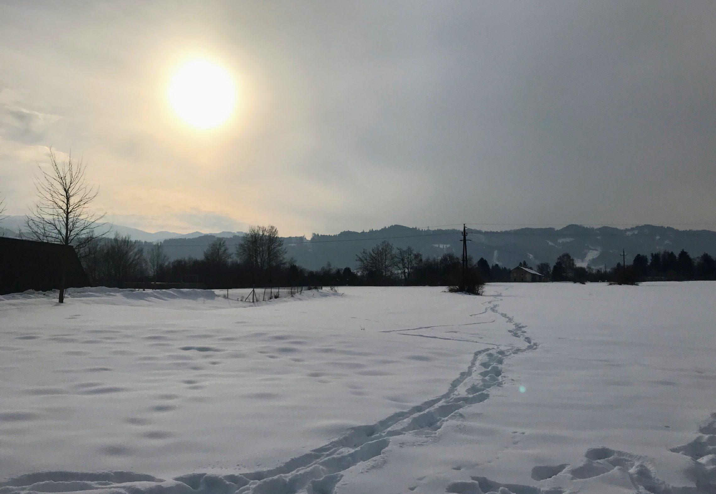 Hundeurlaub Steiermark