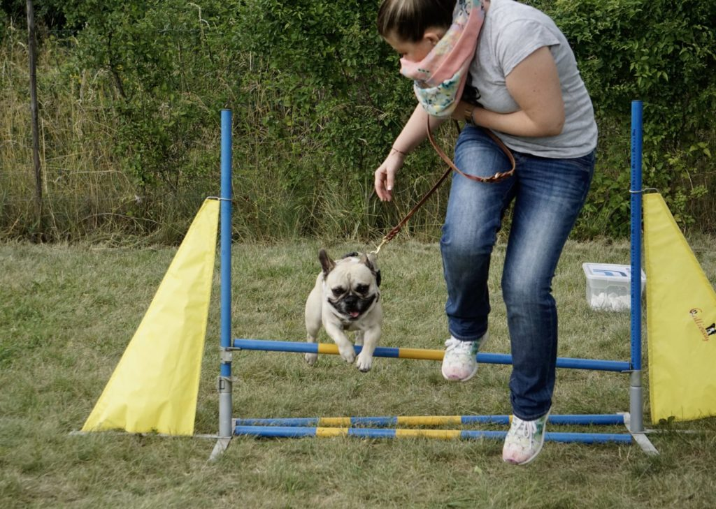 Frenchie Agility