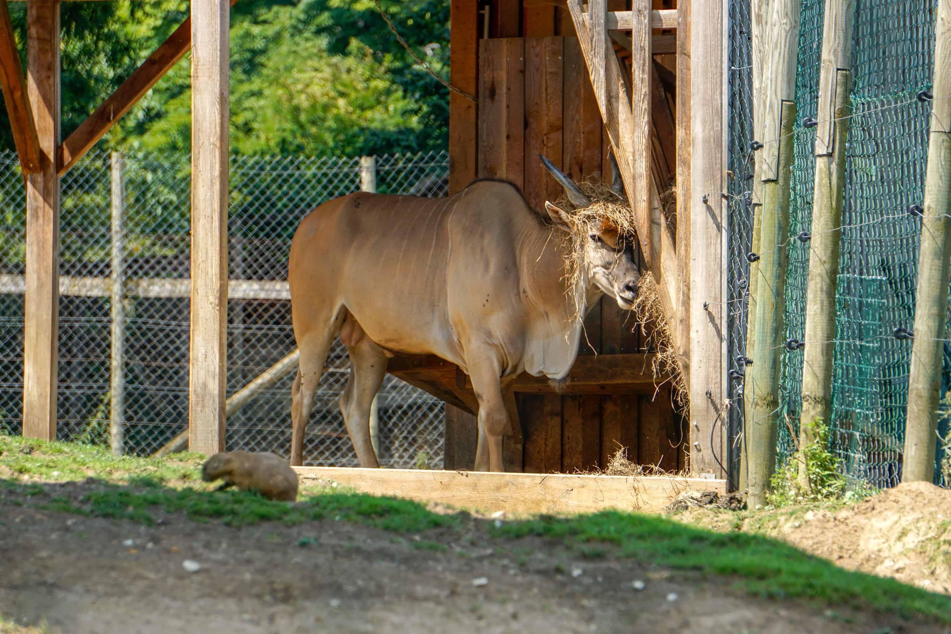 Ausflug Hund Tierpark Herberstein