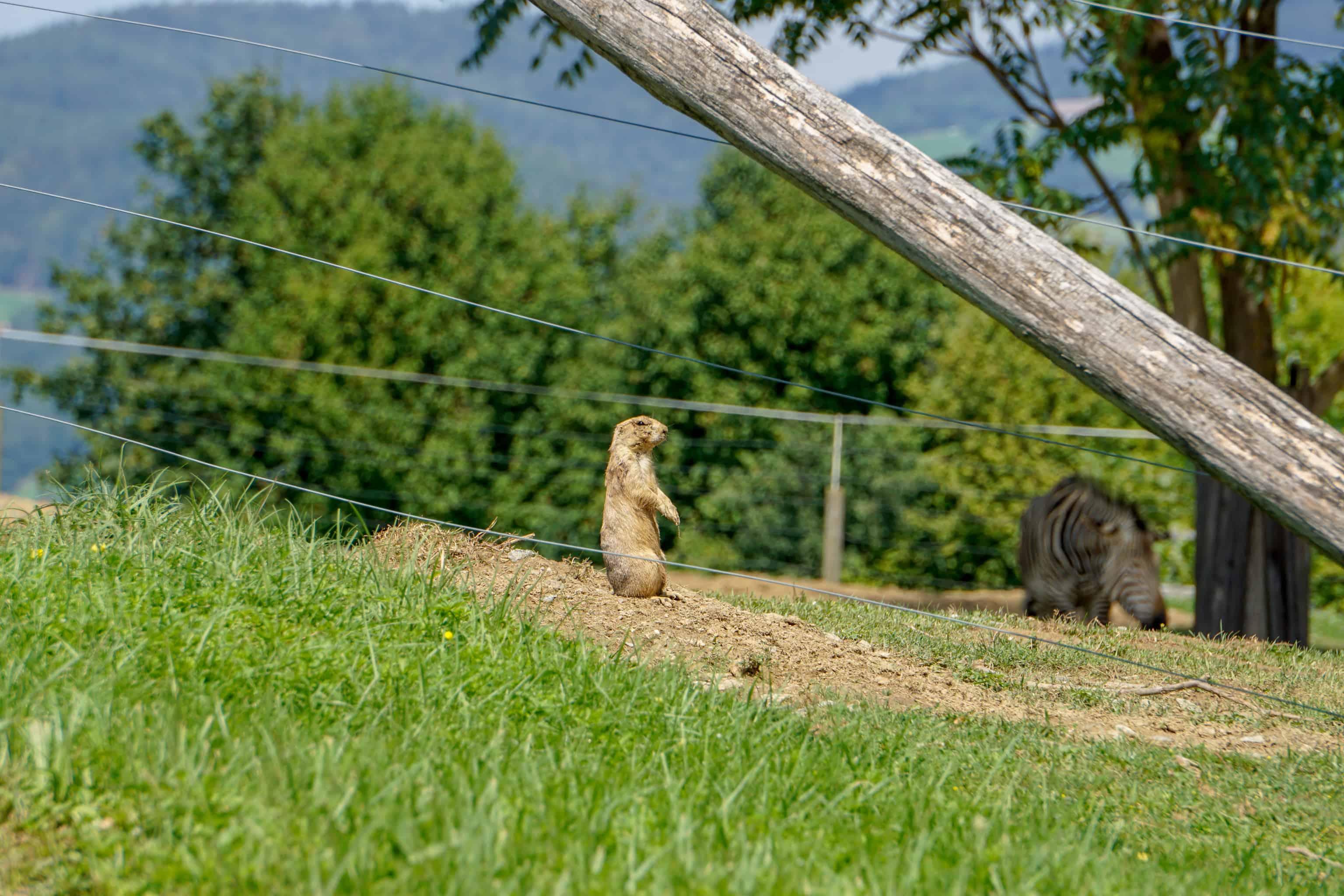 Ausflug Hund Tierwelt Herberstein