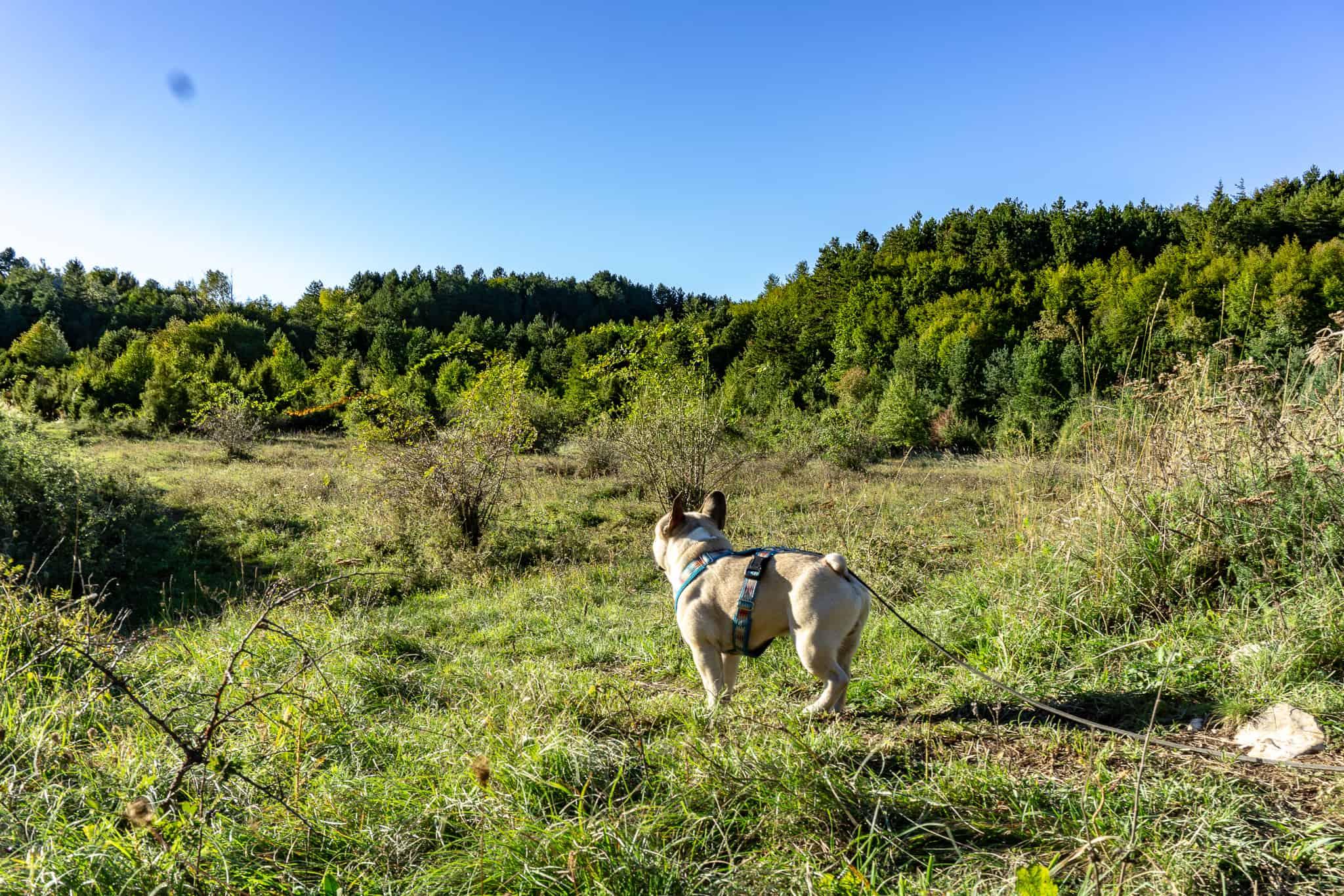 brest pod učkom Wandern mit Hund