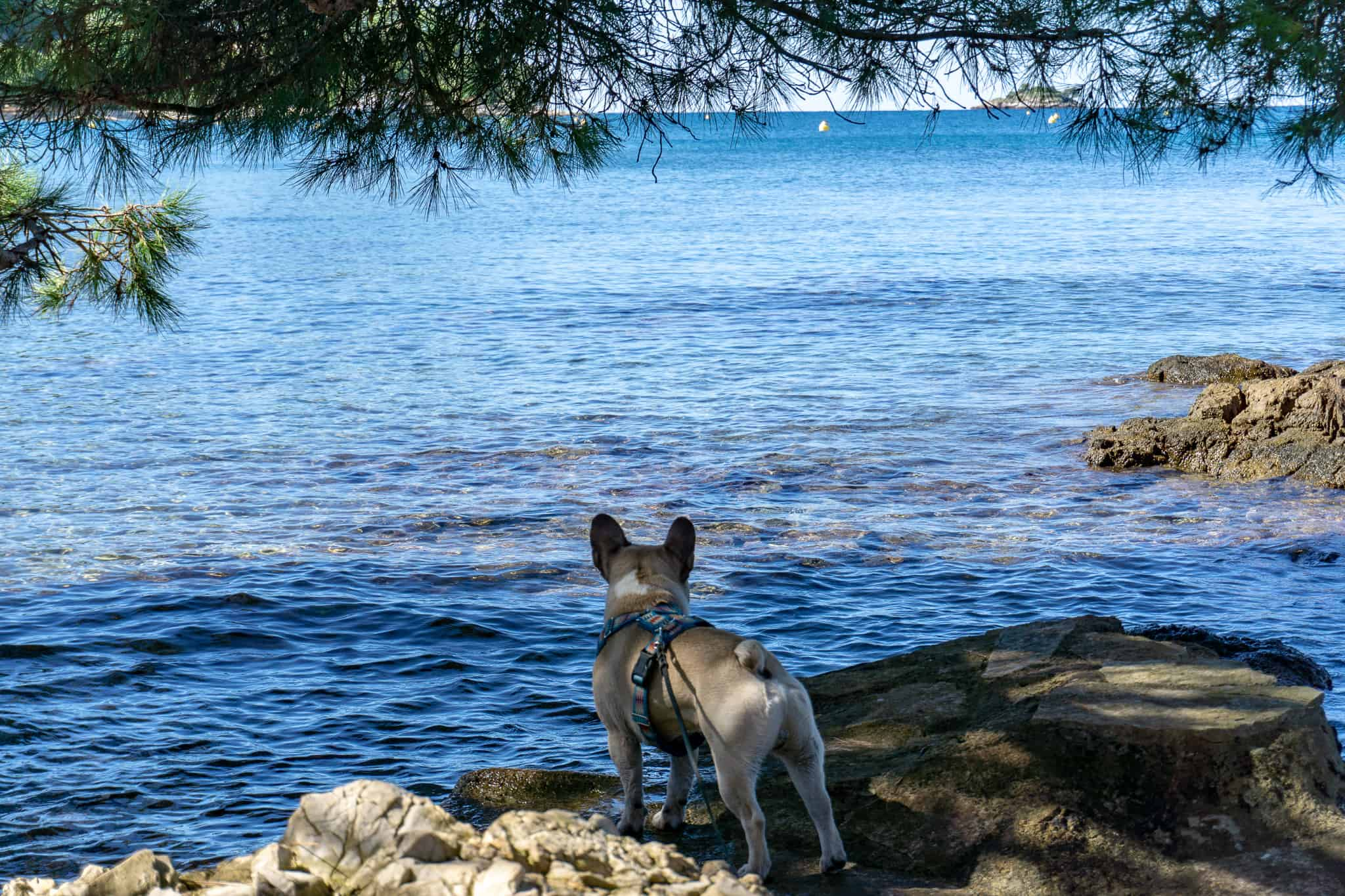 Rovinj Urlaub mit Hund Kroatien