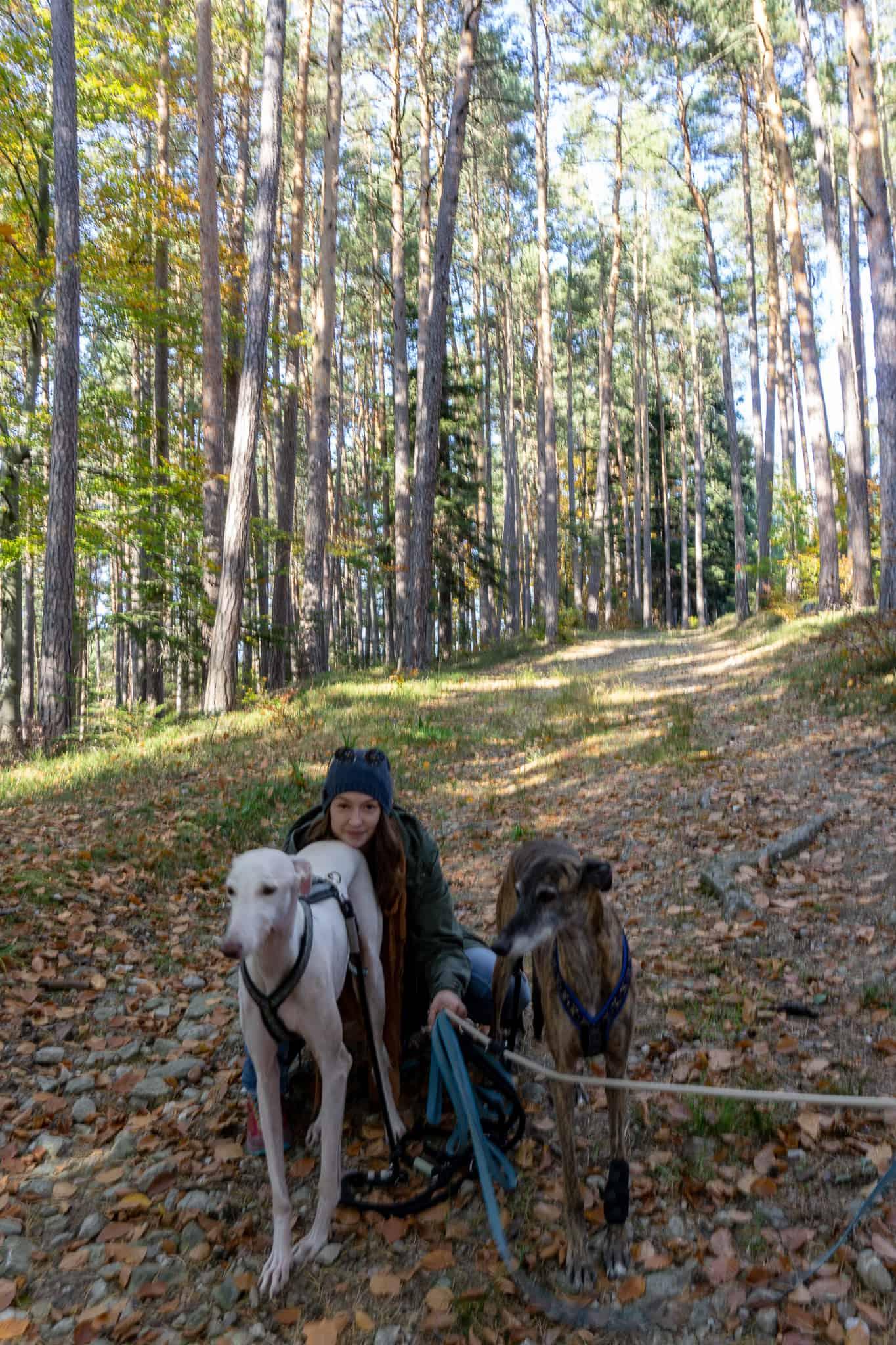 hundefreundliche Wanderung Bucklige Welt