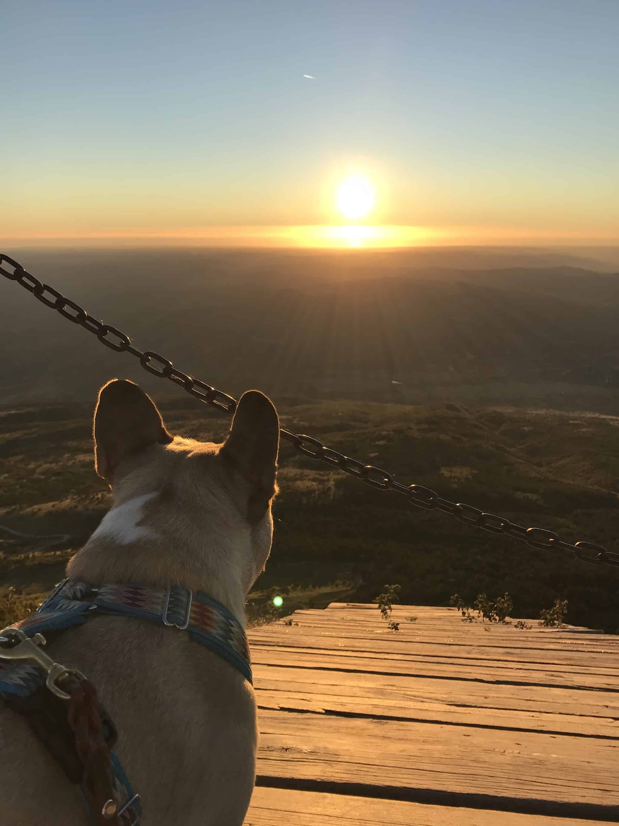 Urlaub Wandern Hund Vojak Kroatien