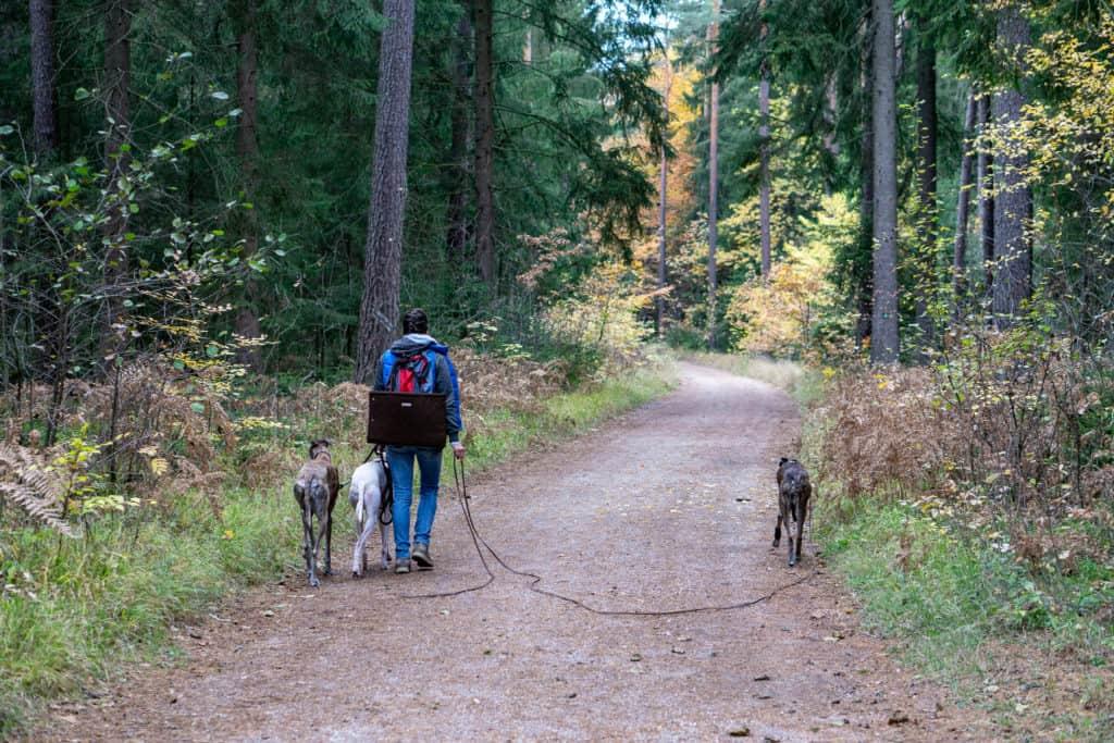 Hundereise Wandern Schwarzach Deutschland