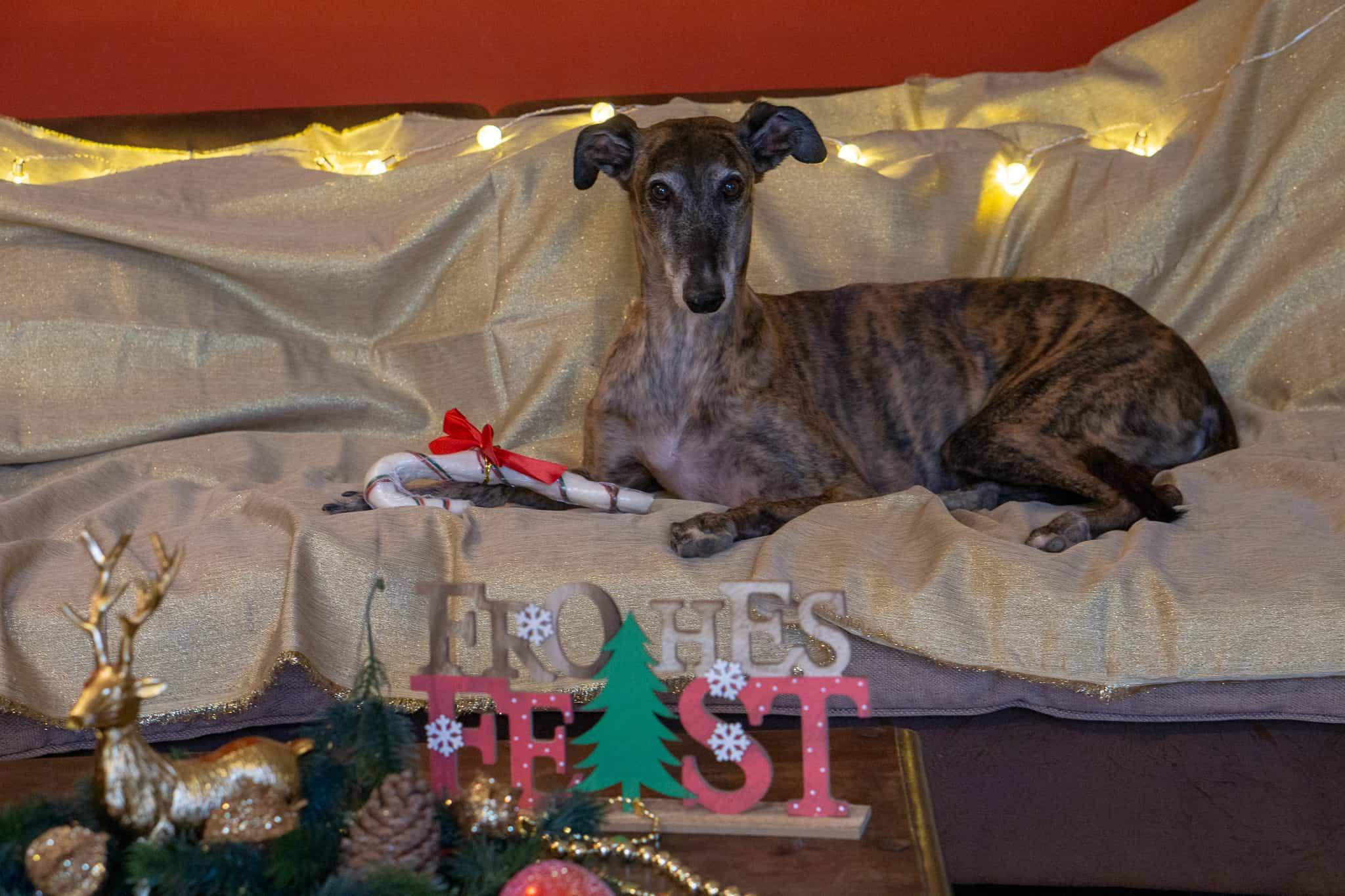 Hundereise tierische Weihnachtsgeschichte