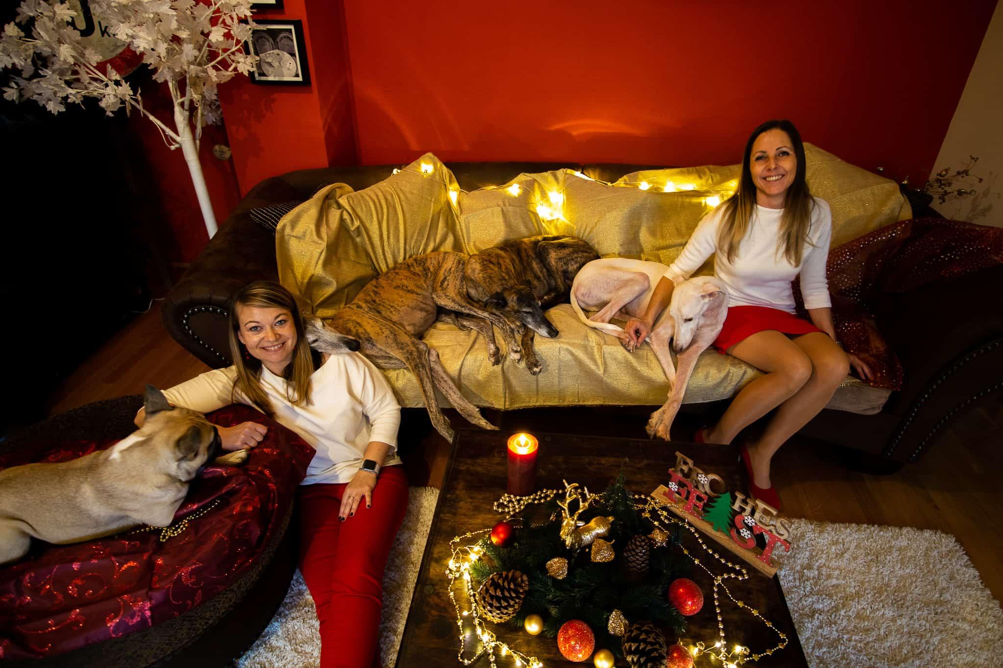 Team Hundereise Frohe Weihnachten