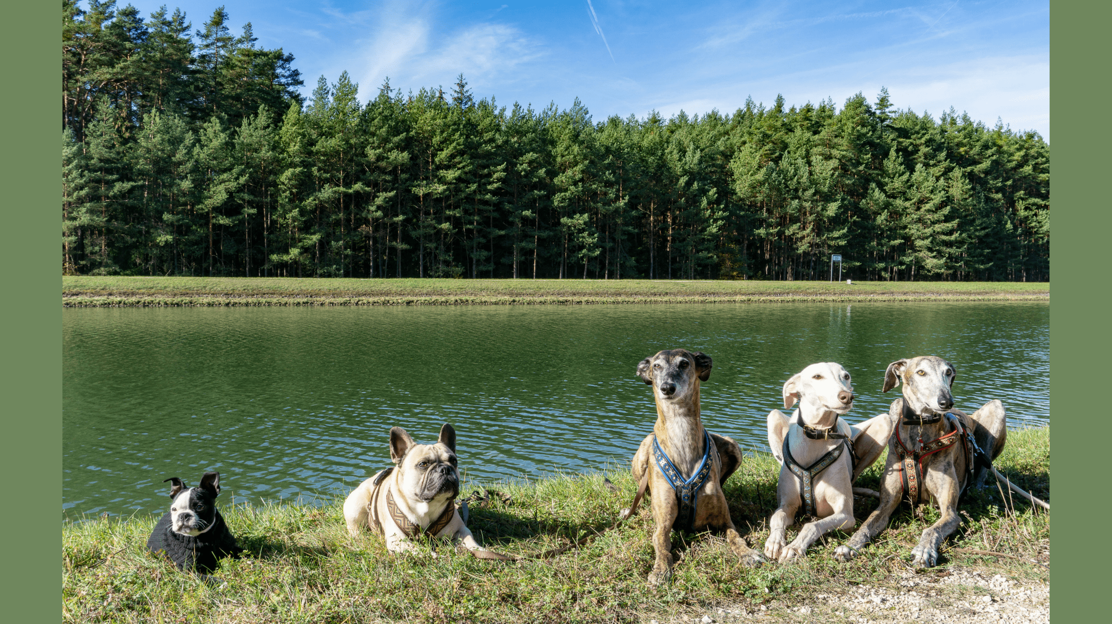 Hundereise-Nürnberg-Teil-1