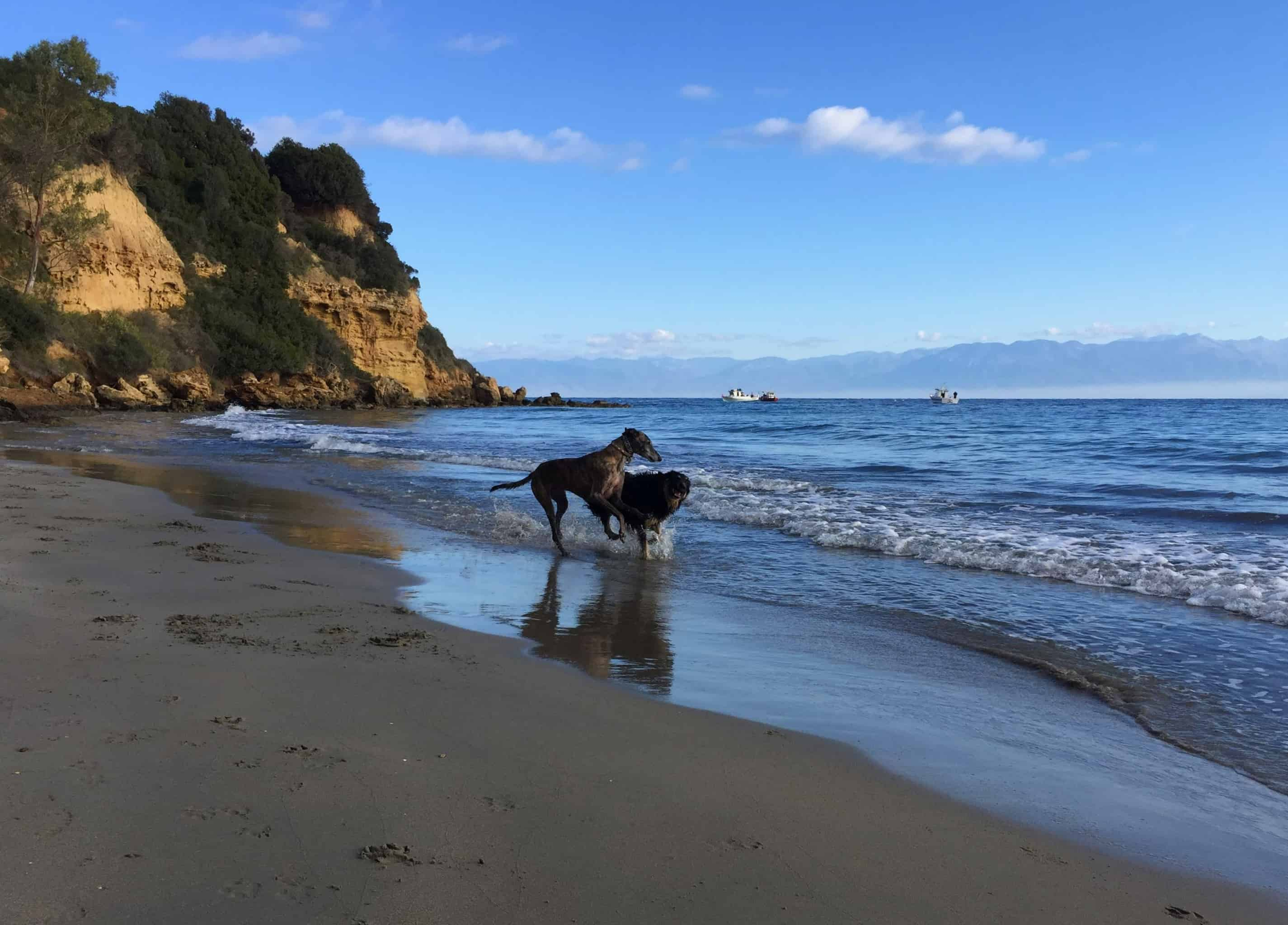 Hundereise Strand Tsapi