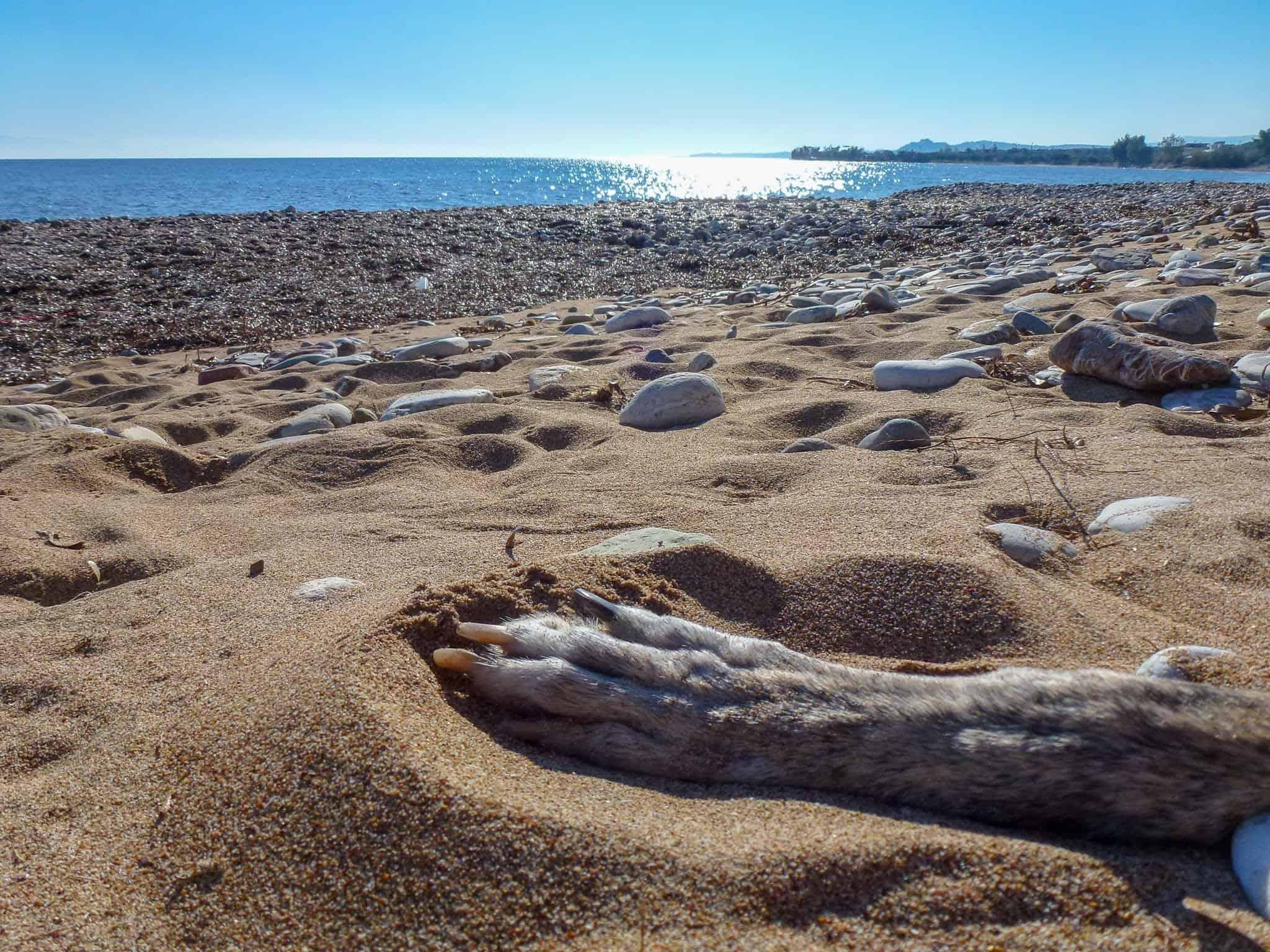 Hundereise Strand Griechenland