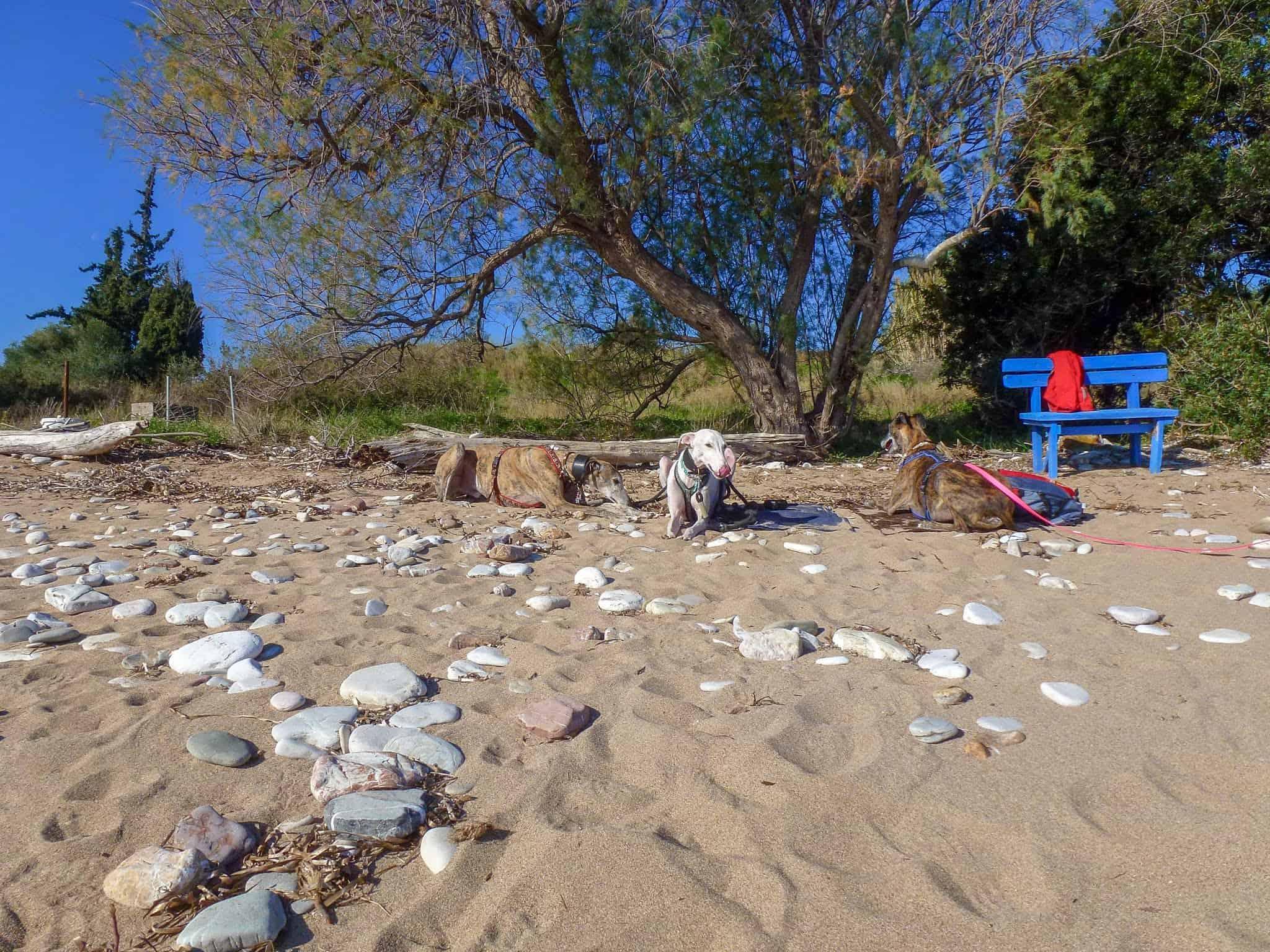 Hundereise Strand
