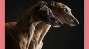 """Tagesseminar """"Forschung trifft Hund"""" Veranstaltung"""