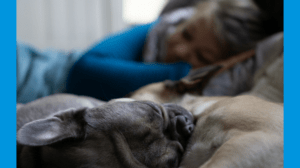 Vortrag entspannter Hund Veranstaltung