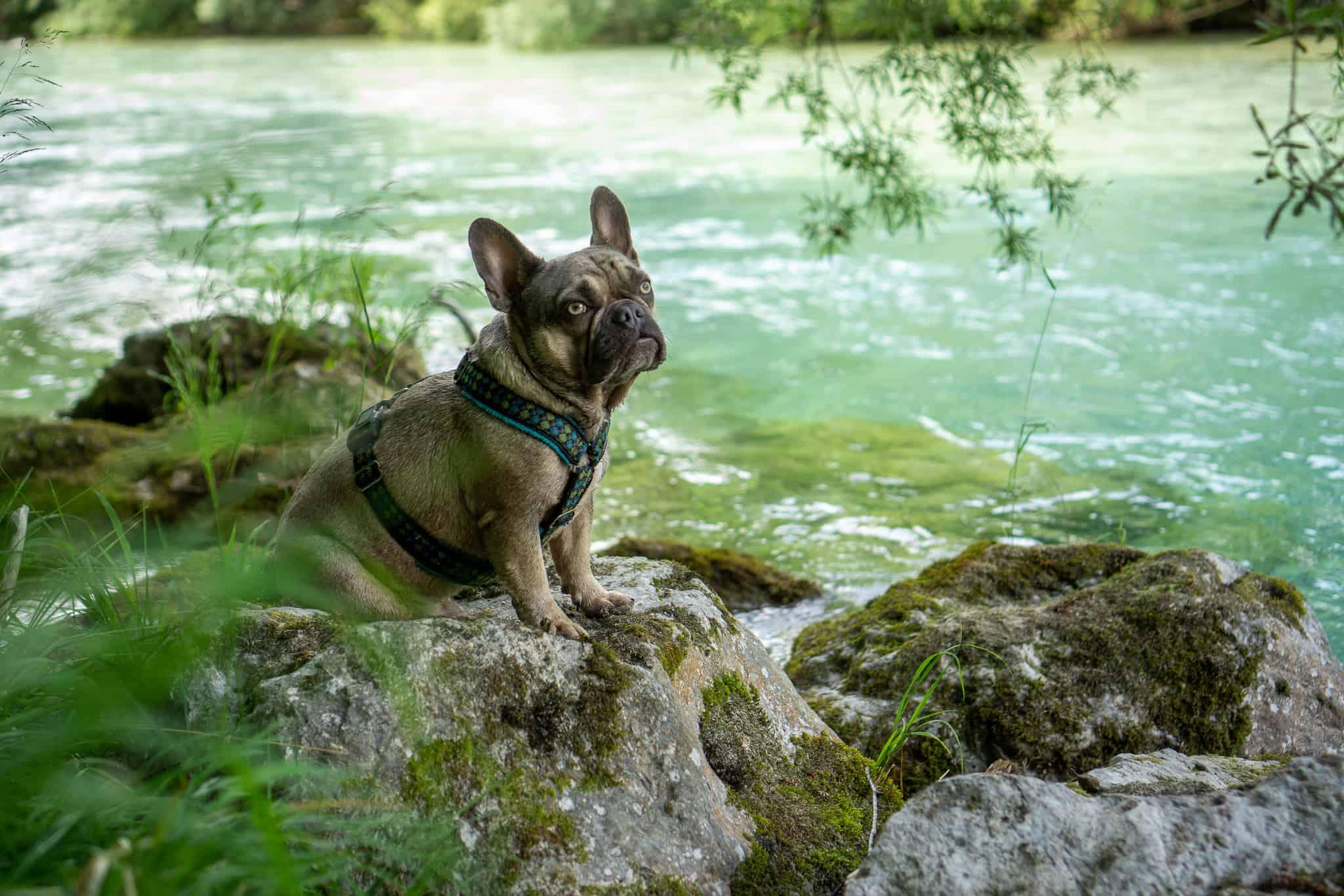 Archy Almfluss Grünau