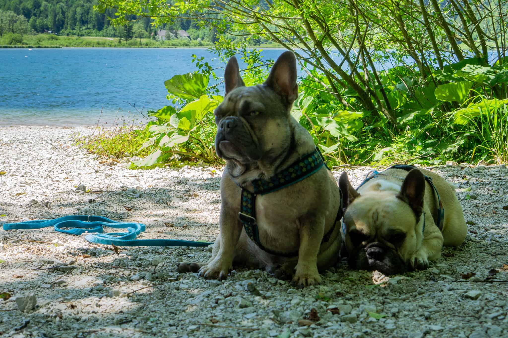 Almsee Grünau Hundereise