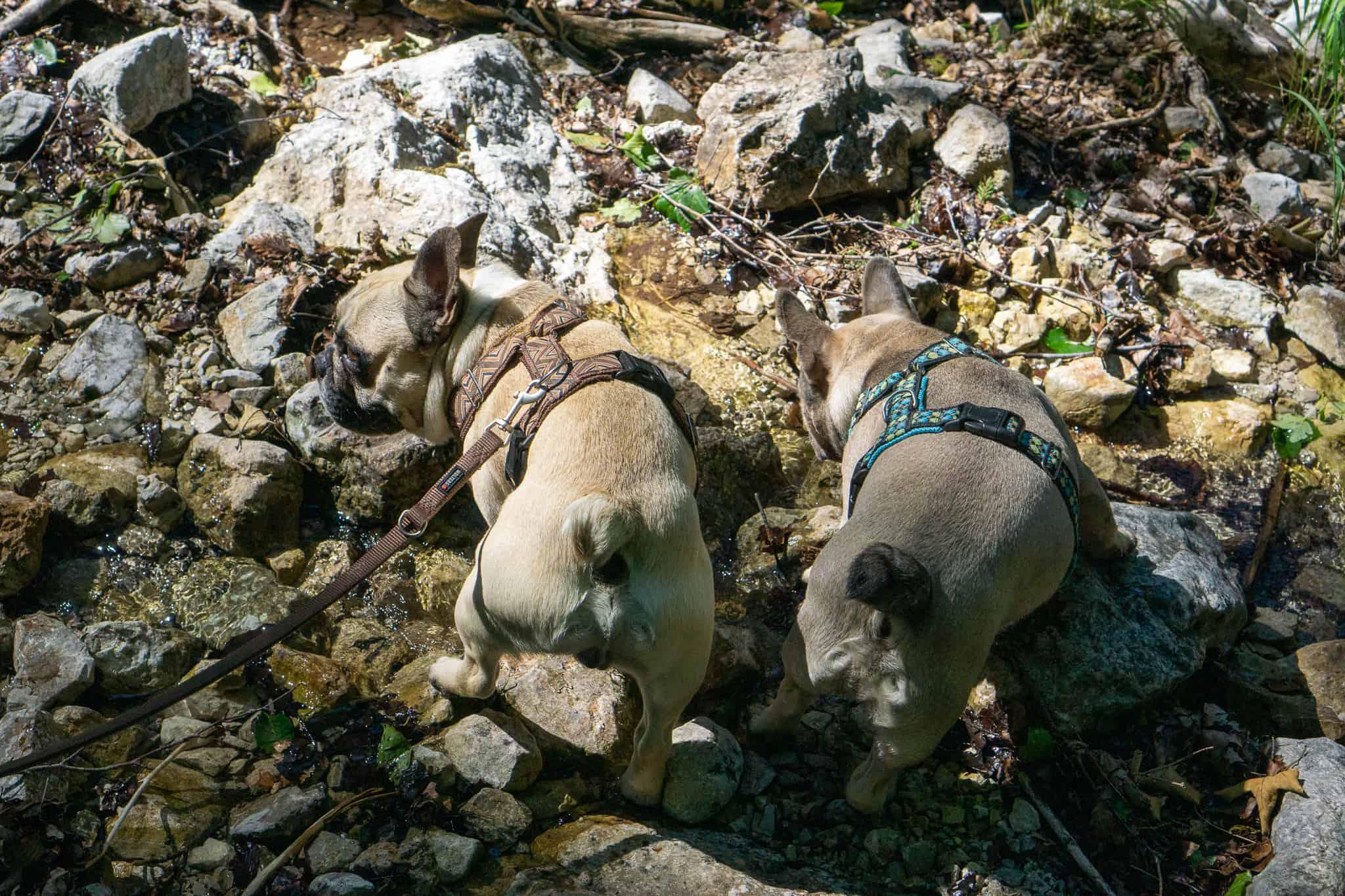 Großer Ödsee Almtal Hundereise