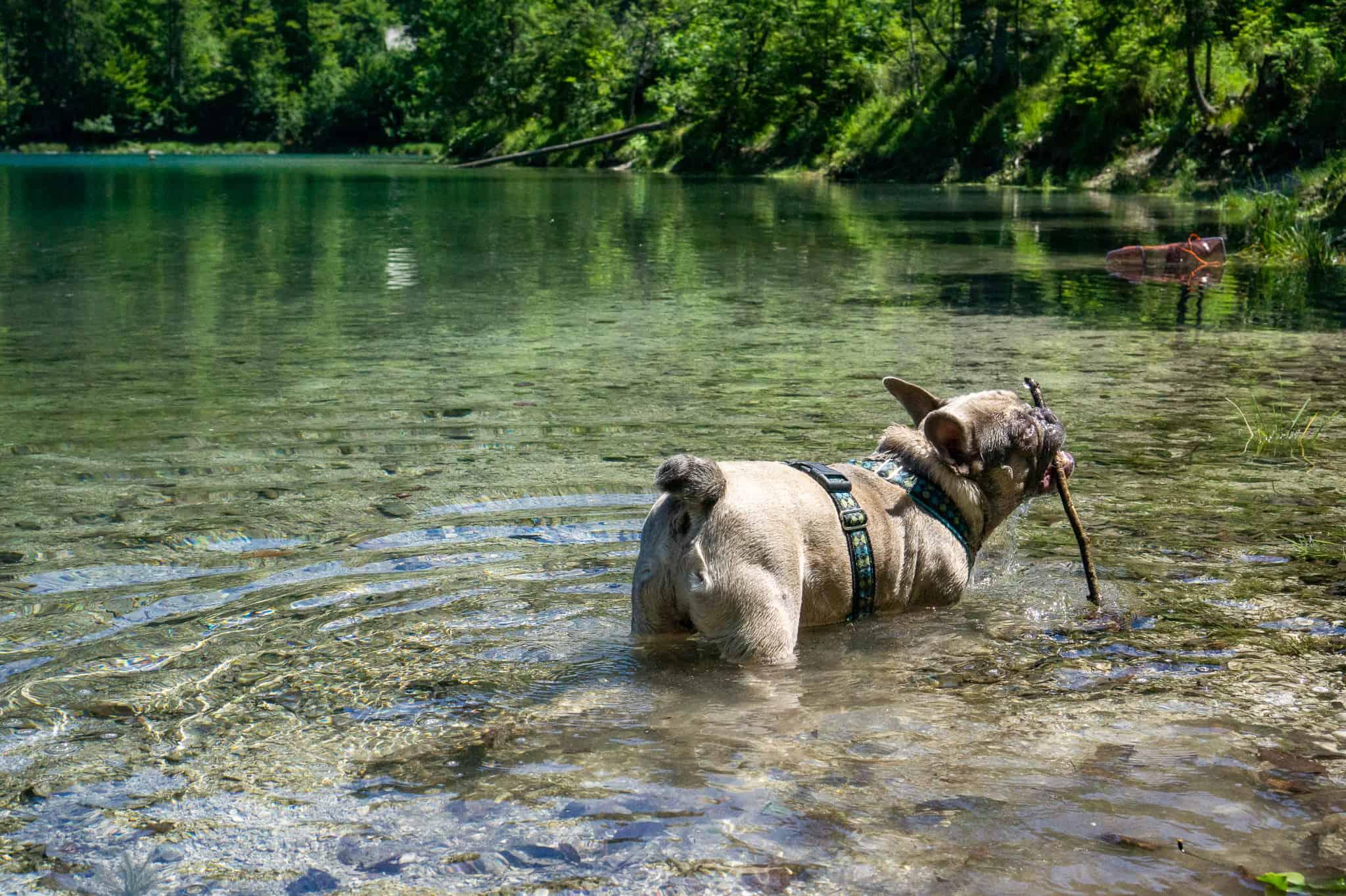 Kleiner Ödsee Hundereise