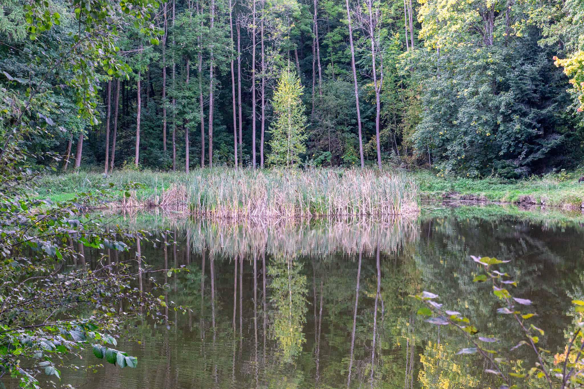 Waldviertel Zwettl Hundereise