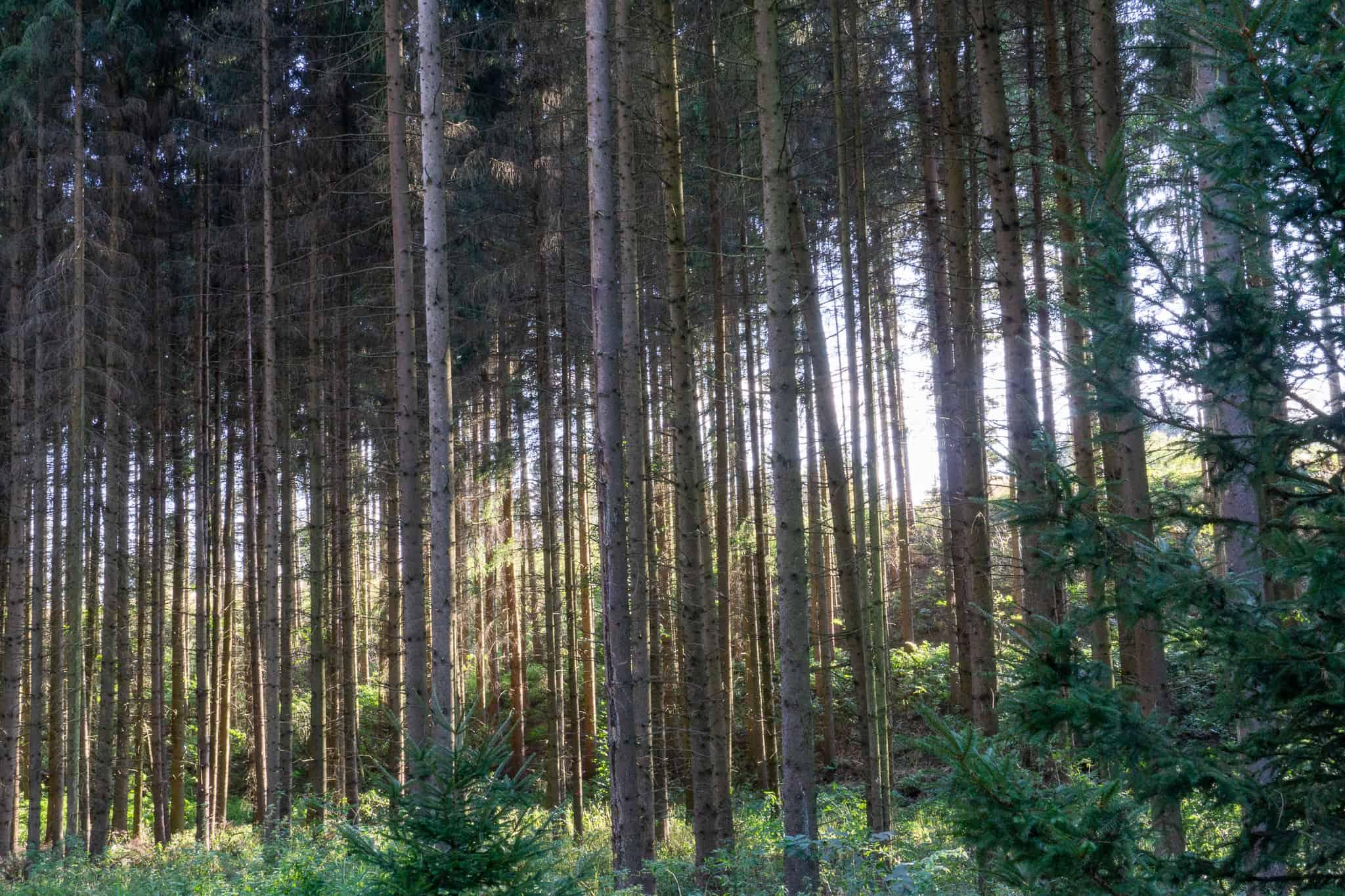Waldviertel Zwettl Hundereise Riegersbach