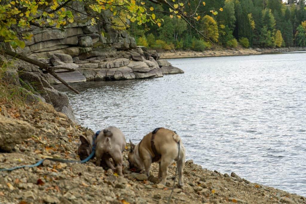 Ottensteiner Stausee Hundereise