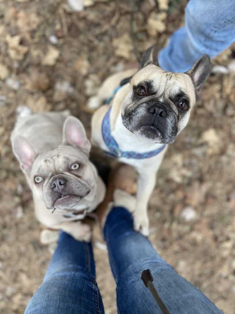 Archie und Murphy mit mir im Wald