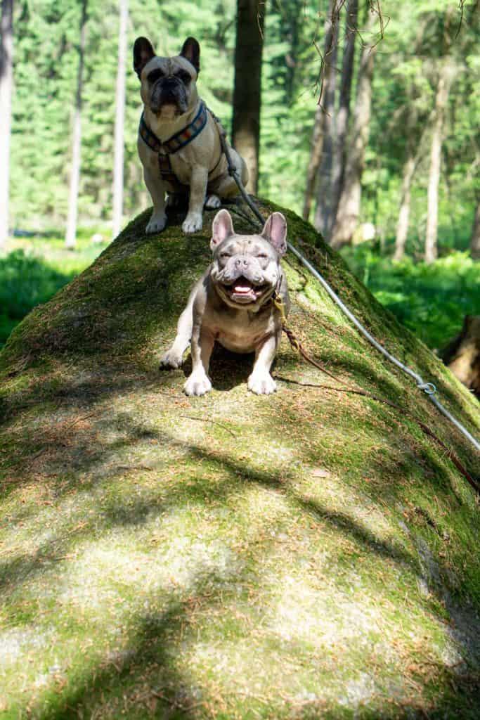 2 Hunde auf einem großen Granoitstein