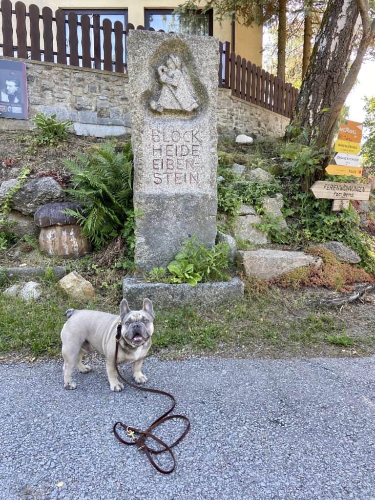 Französische Bulldogge vor einem Stein, der anzeigt, dass man in der Blockheide Eibenstein ist