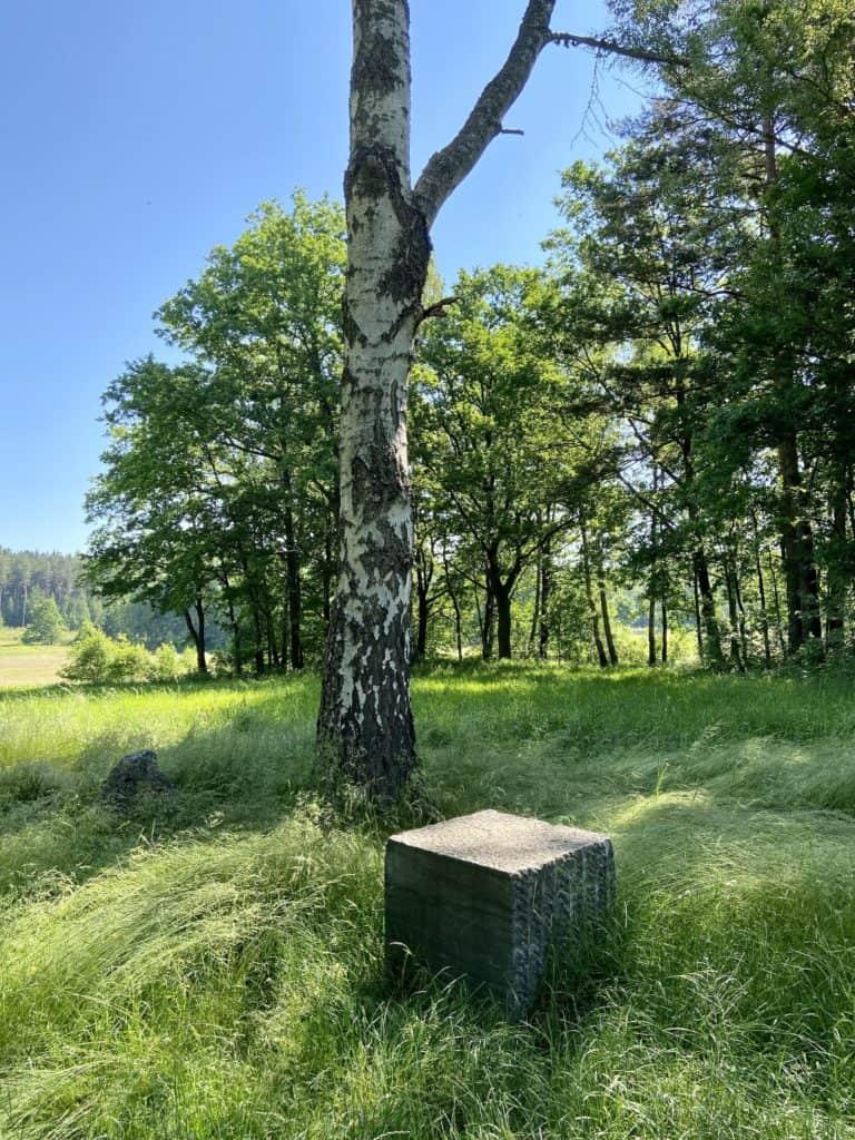 Granitstein vor Birke