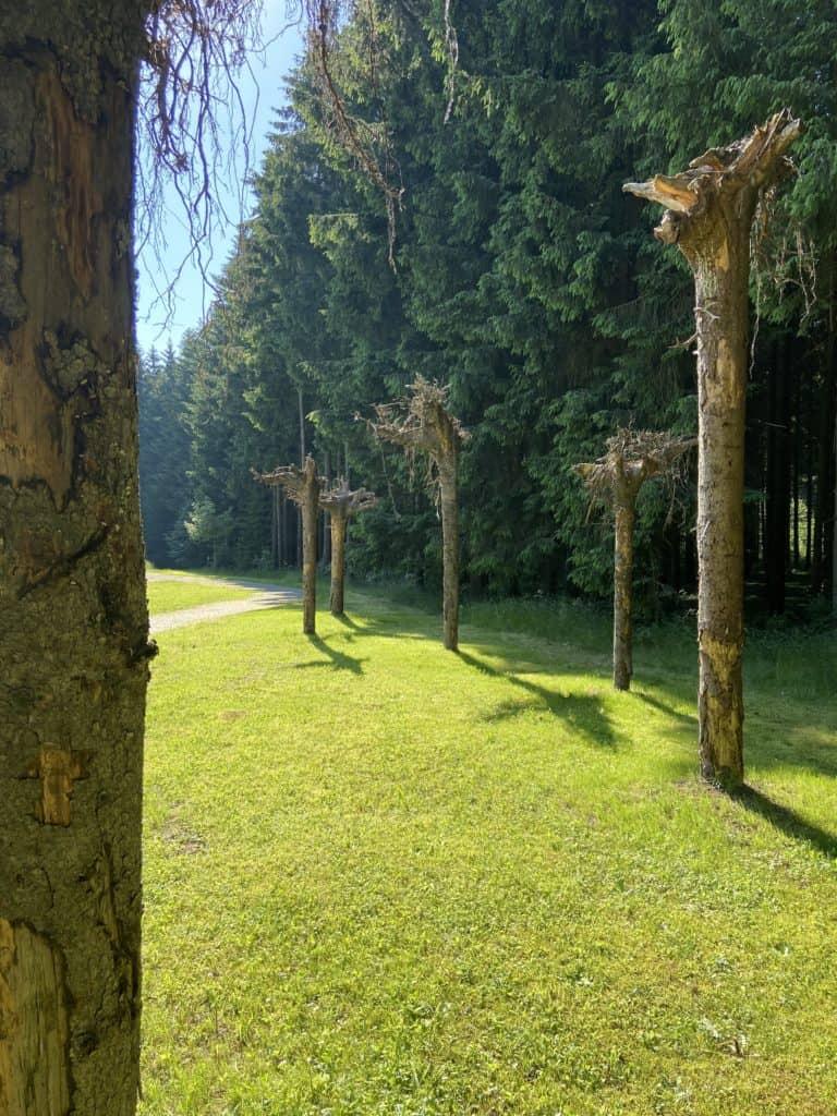 Verkehrte Bäume Wurzeln oben