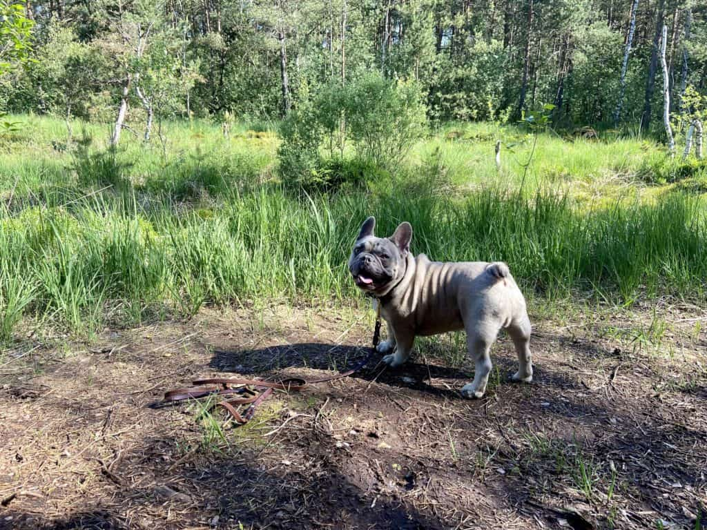 Archie im Hochmoor